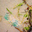 Seaweed Seven by Robert Phillips
