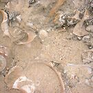 Ordinary Seashell Three by Robert Phillips