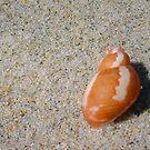 Pheasant Seashell Three by Robert Phillips