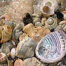 Abalone Seashell Four by Robert Phillips