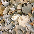 Bottletop Washed Up On Beach by Robert Phillips