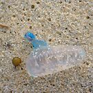 Bluebottle Jellyfish One by Robert Phillips