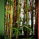 Bamboo by Roger Sampson