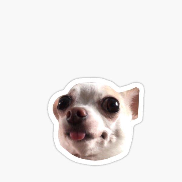 Tiktok chihuahua  Sticker