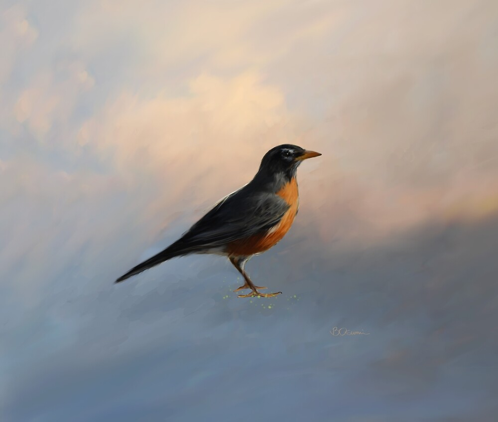 American Robin by DolphinPod
