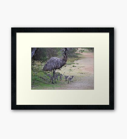 Dad taking the chicks for a walk Framed Print