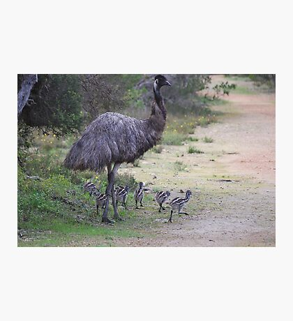 Dad taking the chicks for a walk Photographic Print