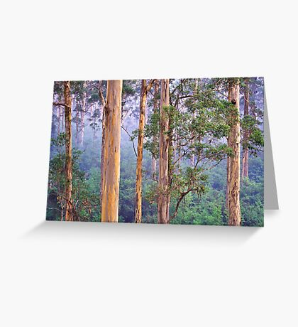 Misty Morning in the Karri Forest Greeting Card
