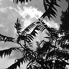 Tropic by Allison  Flores