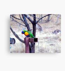 Bush Rainbow Canvas Print
