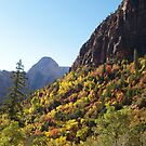 Autumn Colours in Zion by Alex Cassels
