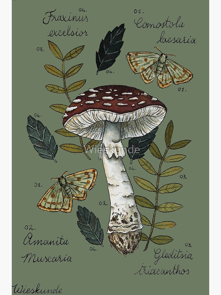 Amanita Muscaria with moths and leaves botanical illustration by Wieskunde