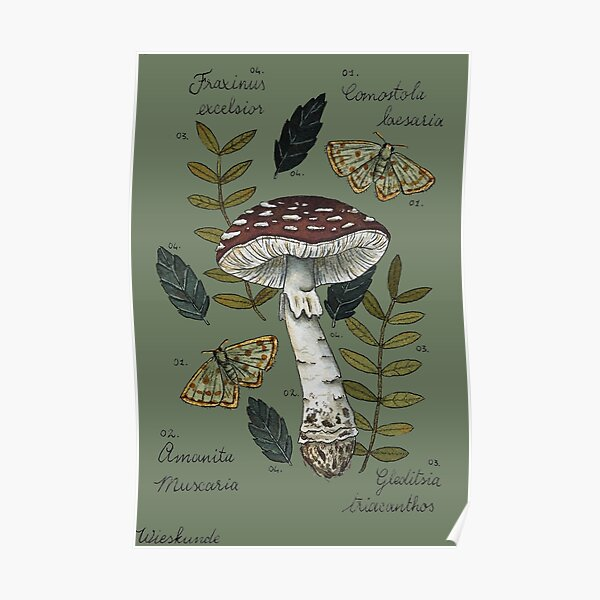 Amanita Muscaria with moths and leaves botanical illustration Poster