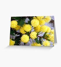 Acacia - Kalamunda, Western Australia Greeting Card