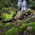 Selva Falls - Border Ranges - Northern NSW - Australia by Soren Martensen
