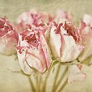 Roses by Evelyn Flint