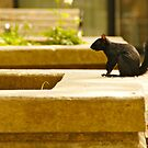 Toronto Squirrel by Sturmlechner