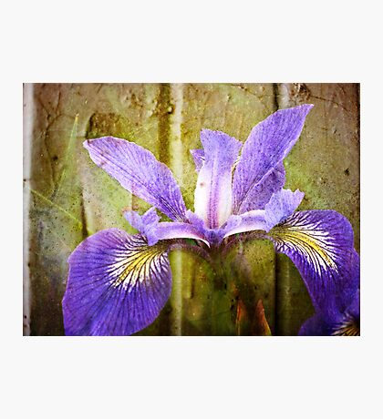 Iris in Artform Fotodruck