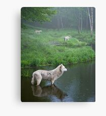 Three weary wolves Canvas Print
