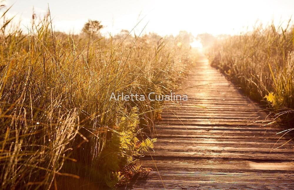 wooden boardwalk and morass grass  by Arletta Cwalina