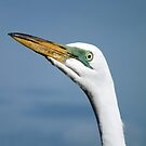 Great White Egret (Ardea alba) by Ludwig Wagner
