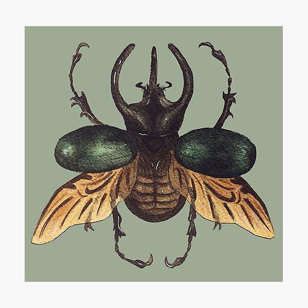 Chalcosoma Atlas Dynastid beetle watercolor Photographic Print