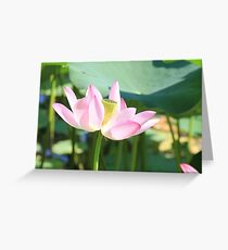Soft, and Pink Greeting Card