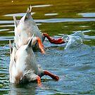 The Duckie Olympics Presents..... by ArkansasLisa