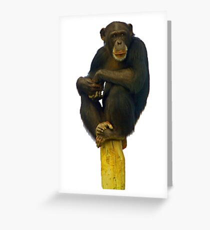 Pole Sitting T-Shirt Greeting Card