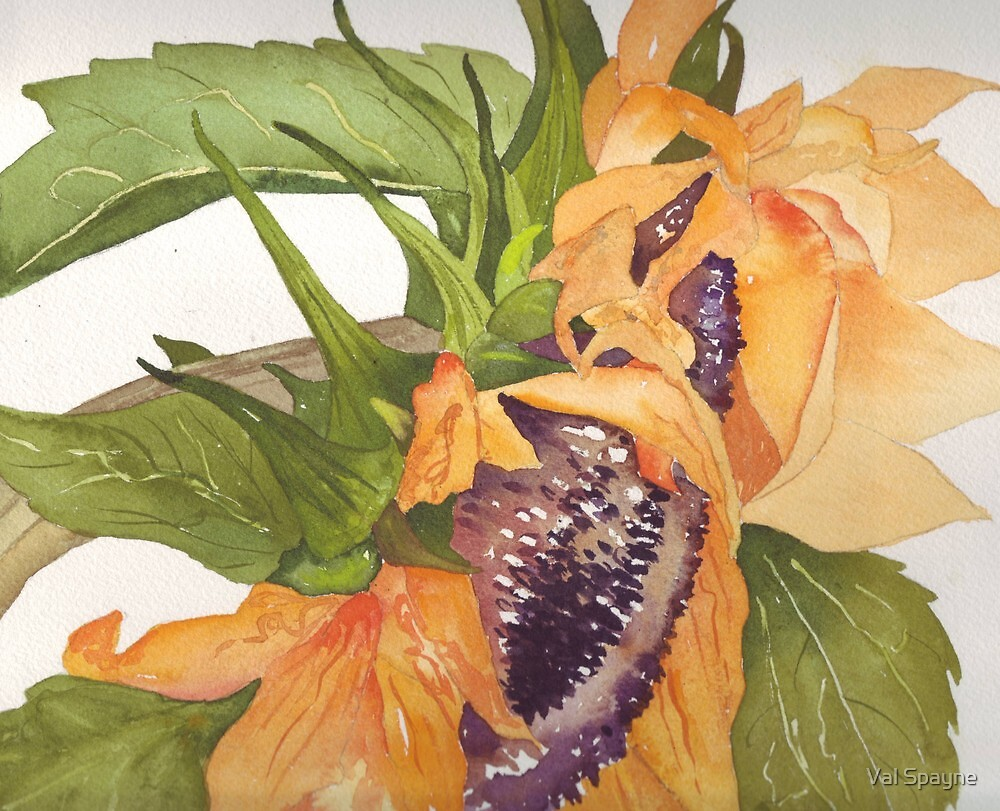 Sunflower by Val Spayne