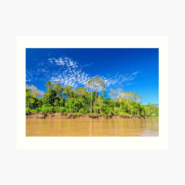 Amazon Riverfront Jungle Art Print