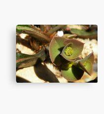 Flower In Flower Euphorbia francoisii Leinwanddruck