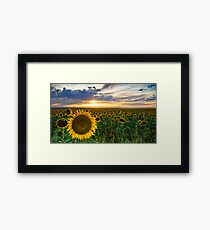 Sunflowers Of Golden Hour Framed Print