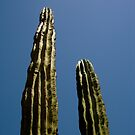 Dueling Cacti by Joshua Russell