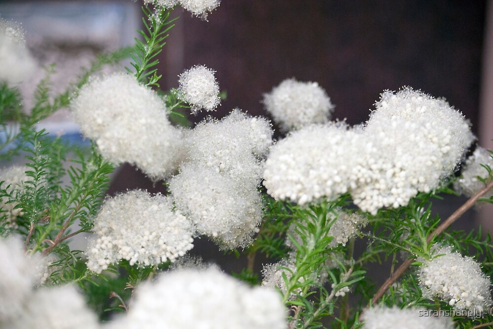 Longwood Gardens - Spring Series 6 by sarahshanely