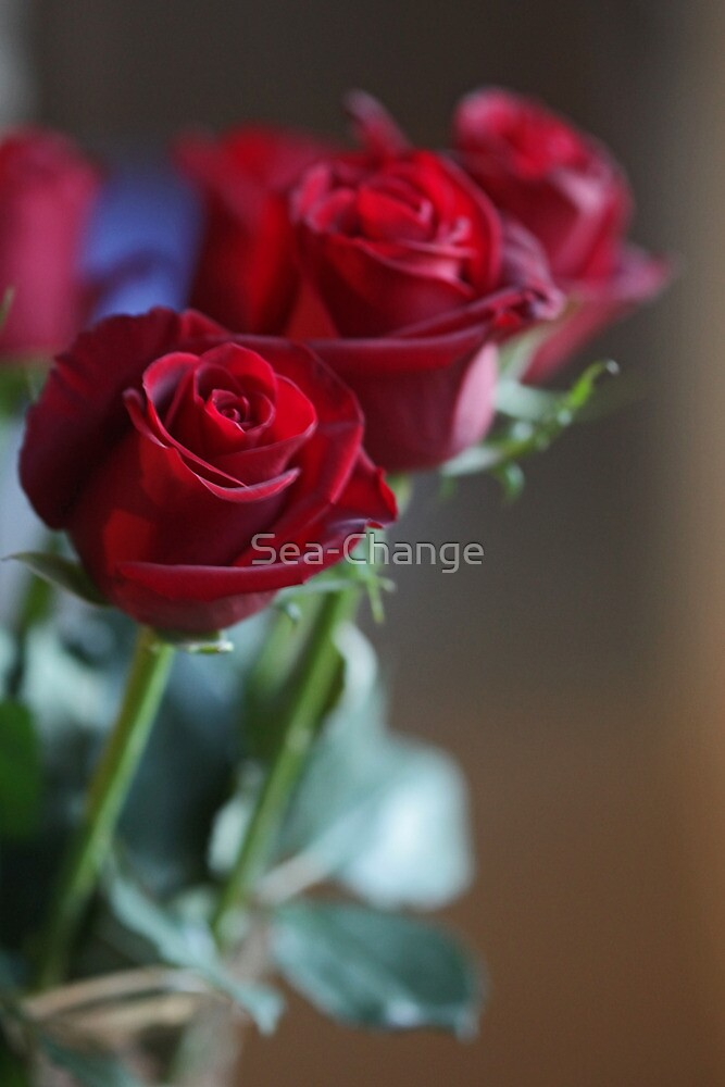 Bunch of Red Roses by Sea-Change