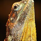 Frilled Necked Lizard by Eve Parry