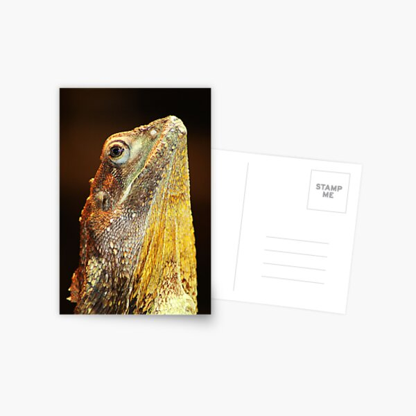 Frilled Necked Lizard Postcard
