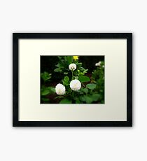 A Soft Touch Of Green Framed Print