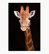 Taronga Giraffe Photographic Print