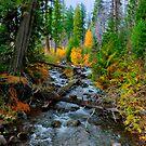 Jack Creek ~ Central Oregon ~ by Charles & Patricia   Harkins ~ Picture Oregon