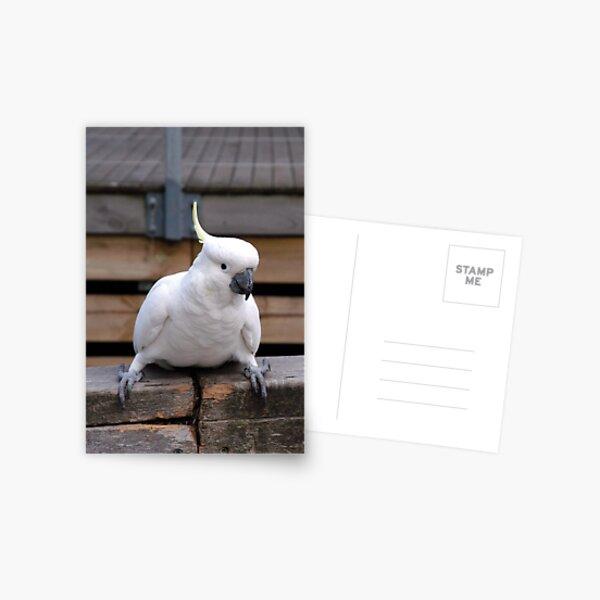 Cheeky! Postcard