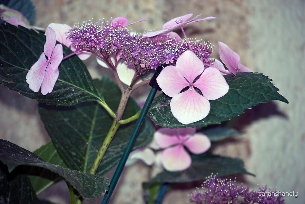 Longwood Gardens - Spring Series 13 by sarahshanely