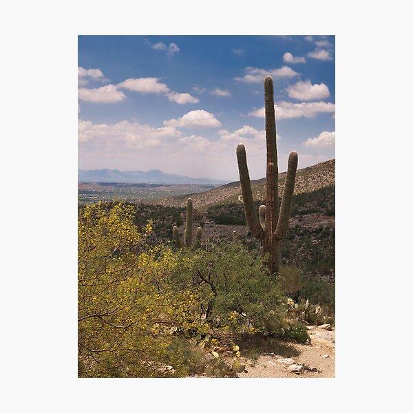 Desert Scene - Saguaro Photographic Print