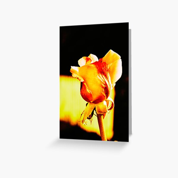 Yellow Rose on Fire Greeting Card
