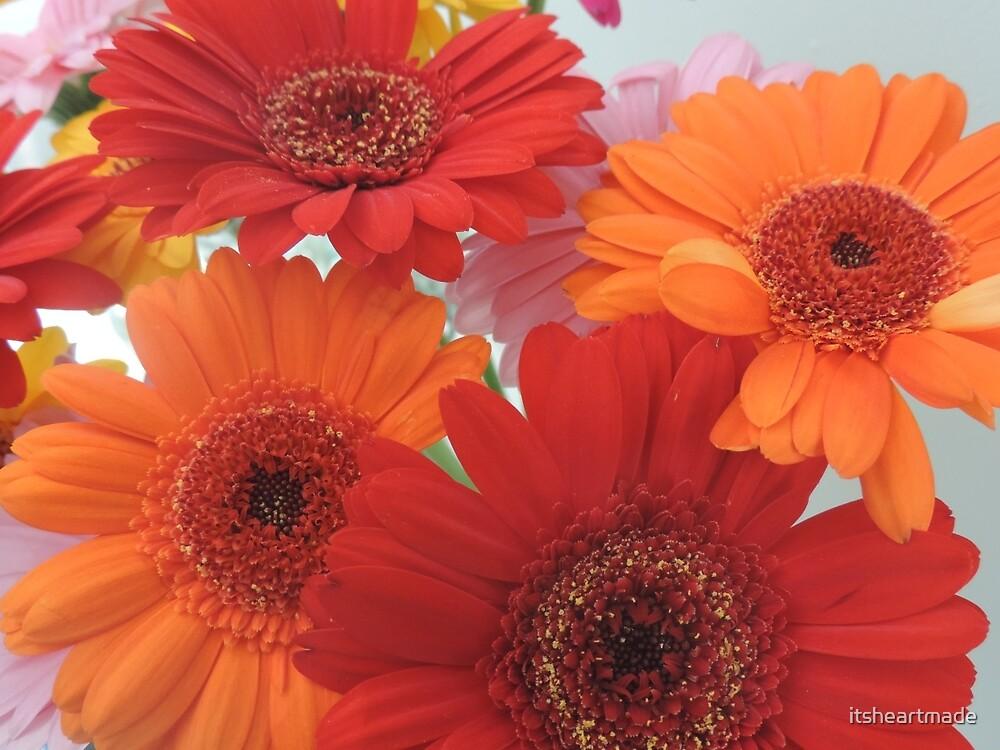 Gerbera flowers by itsheartmade