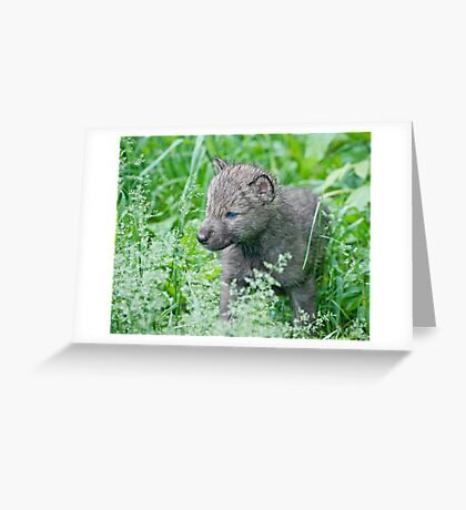 Explorin' Greeting Card