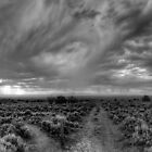 Rift Valley Trail -- B&W by Bill Wetmore