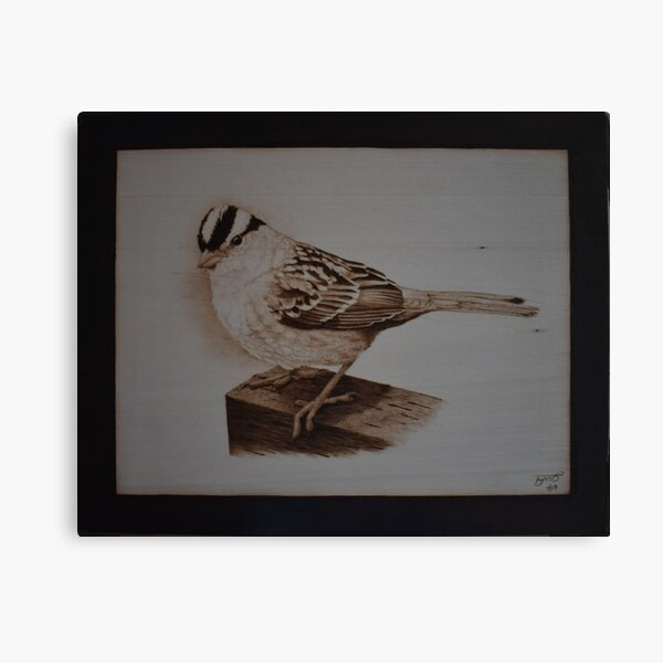 White-Crowned Sparrow  Pyrography Artwork Canvas Print