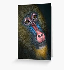 Mandrill's Portrait Greeting Card